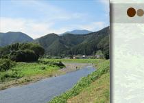 檜の山と川風景